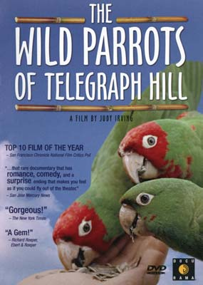 Wild Parrots Of Telegraph Hill, The (Dokumentar) (DVD) - Klik her for at se billedet i stor st�rrelse.